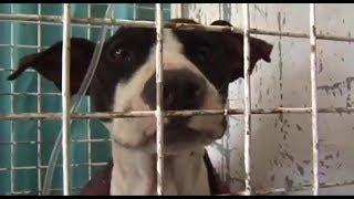 Khayelitsha's animal sanctuary needs assistance