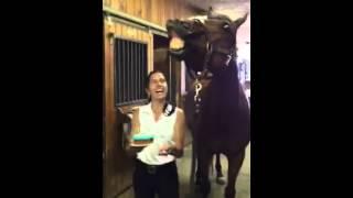Molestias del caballo de Nueva York