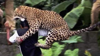 16 Worst Animal Attacks