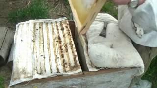 Смотрите и ужасайтесь - работа со среднерусской пчелой, самой злобливой и самой агрессивной!
