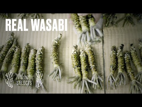 Story of a 75 year old wasabi farmer and his methods