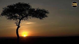 SafariLIVE   Sunrise Safari   April 07, 2019