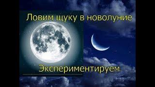 Лунный календарь когда клюет щука