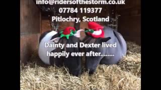 Dexter's Christmas Adventure 2016