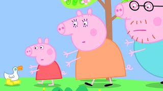 Peppa Pig Official Channel   Peppa Pig Can't Find Her Golden Boots