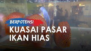 Indonesia Berpotensi Kuasai Pasar Ikan Hias Karena Faktor Alam