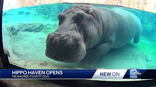 Hippo Haven opens at zoo