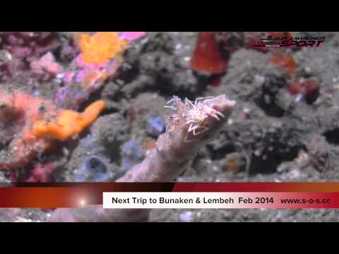 Dive the Strait of Lembeh !