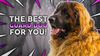 What Is The Best Guard Dog Breed FOR YOU!