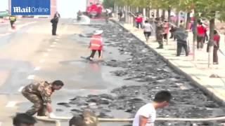 فيديو سريلانكا تمطر سمكاً!