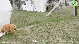 2021 03 18 Meggi…