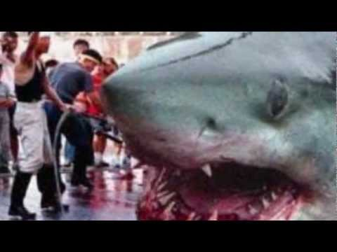 Megalodon Sightings Around The World!!!