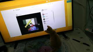 Curious kitten chases down mouse on TV