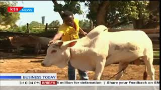 Business Today -21st December 2017: Good business for Beef farmers in Malindi town