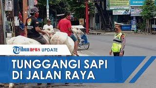 Dua Warga Karanganyar Jalan-jalan Naik Sapi hingga Diberhentikan Polisi, Gara-gara Tak Pakai Masker