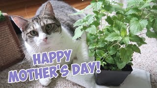 Happy Mother's Day! Stella Celebrates With A Catnip Bouquet