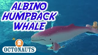 Octonauts - Albino Humpback Whale | Full Episode | Cartoons For Kids
