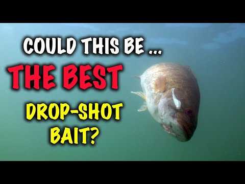 Could This Be the Best Drop-Shot Bait?