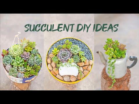 7 Succulent DIY Ideas | Tái chế đồ cũ trồng sen đá