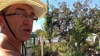 Осенние работы в огороде на Кубани