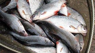 Отчет о рыбалке на юхоть