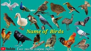 Name of Birds  Birds Name Hindi & English language  Birds name english Easy english Learning process