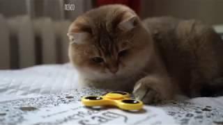 ПРИКОЛЫ 2018 Апрель Лучшие приколы с Животными Животные и воздушные шарики Смешные Собаки и Кошки
