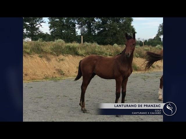 LANTURANO DE PRANZAC
