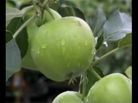 Kleine Obstbäume für den Garten