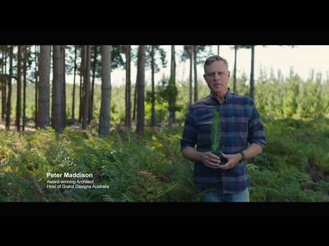 Softwood trees - The Ultimate Renewable™ 15 sec video