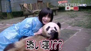 藤岡みなみのパンダに会いたい!in四川省その1