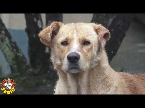 Cachorro sem dono e solto já matou 2 cachorros nas ruas da Favela do Justinos e Assusta Moradores e a Prefeitura não faz nada ?