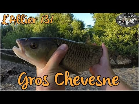 "8 leurres souples Flit 3"" FISHUP 77mm pêche perche bass chevesne rockfishing"