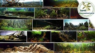 Konkurs biotopowy Biotope Aquarium Design Contest 2015