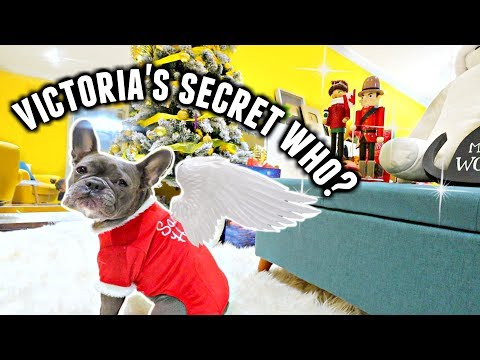 I Threw My Dogs Their Own VICTORIA'S SECRET FASHION SHOW! | Vlogmas Day 20