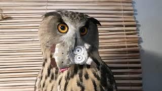 Ваша сова зависла, перезагрузите систему