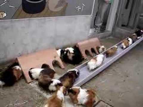 Verme allatto di un trattamento di gattino