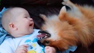 Sevimli Kedi Ve Köpekler Aşk Bebekler Derleme 2015 - Köpekler 2015 - Kedi 2015 - 720P