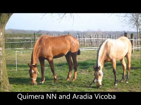 Yeguada Pura Raza Espanola Muguet is a color-breeding farm in the Netherlands !
