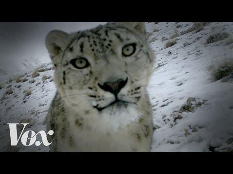 Nejlepší kočičí videa jsou z přírody