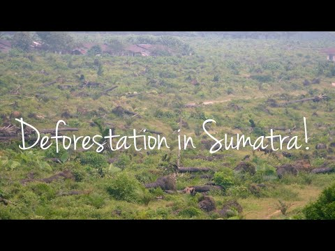 Palm oil production effect on Animal and Plant Life - Deforestation in Sumatra! (2019): Forests aroud the world are disappearing and it's all for the palm oil!