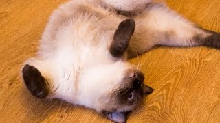 Why Cats Lie On Their Backs To Greet You And Other Feline Facts