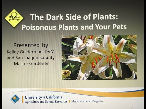 , title : 'Dark Side of Plants - Pets and Poisonous Plants