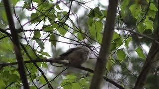 De Vogel 's Komen Er Weer Aan Op Mijn Kanaal