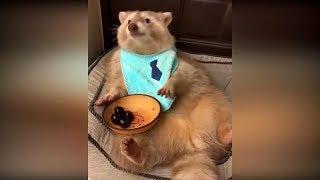 Видео про кошек до слёз #22, смешные видео с животными, приколы с котами 2019, видео про котов 2019