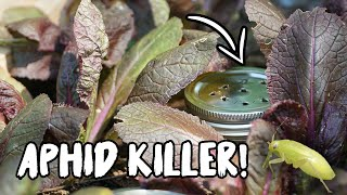 CONTROL ANTS & APHIDS with this SIMPLE TRICK