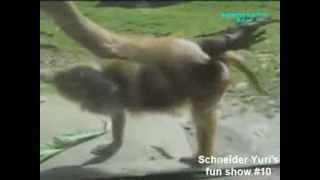 clip hài hước nhất về động vật