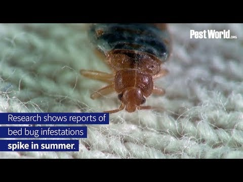 Bed Bugs Spike During Summer Travel
