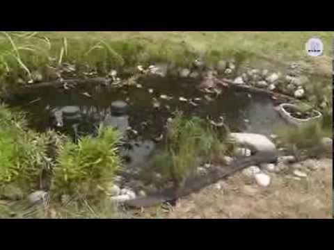 FIAP PondNet Active Teichabdecknetz