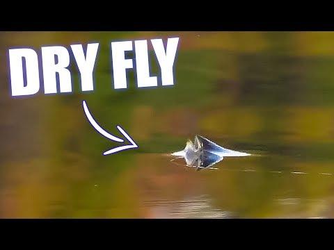 Fiskeporno - Bækørreder og stallinger tager tørfluer